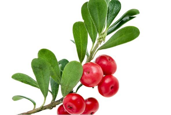 Bärentraubenblatt